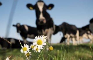 Brabantse melkveehouders beloond voor verbeteren biodiversiteit