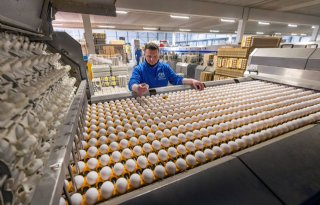 Paasdrukte+bij+eierverpakker+in+Barneveld