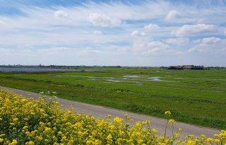 Noord-Holland schrapt extra regelgeving biodiversiteit