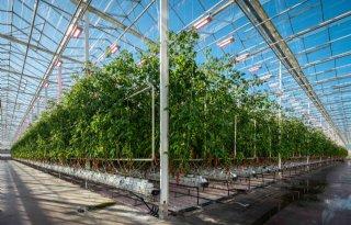 Kwekerij in Noorwegen start met jaarrond telen onder ledbelichting