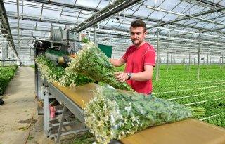 Euphorbia+fulgens+is+weer+helemaal+hip