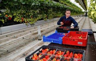 Genson Lost Fruits krijgt voucher tegen voedselverspilling