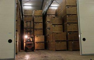 NFO: Fruittelers voorlopig niet verlost van corona