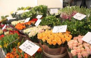 Mensen+besteden+sinds+corona+niet+minder+aan+bloemen+en+planten
