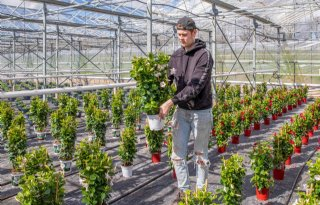 Plantengekte zorgt voor tekort bij kweker