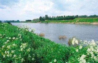 Minister: glyfosaat in Maas waarschijnlijk langdurige illegale lozing