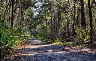Oxfam: klimaatplannen leunen te veel op aanplant nieuw bos