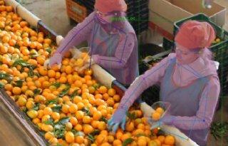 Kwartaalaangifte voor kleine ondernemers van de baan