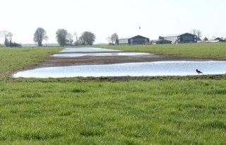 Omzet Veiling Rhein-Maas stijgt 4,3 procent