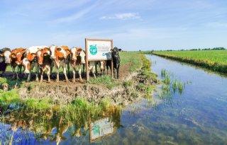 Albert Heijn breidt duurzame melkstroom uit