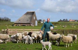 Texelse+boer+lonkt+naar+Randstedelijke+toerist