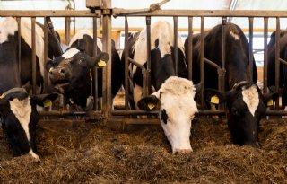 Saldo+melkveehouderij+hoger+dan+vorig+jaar