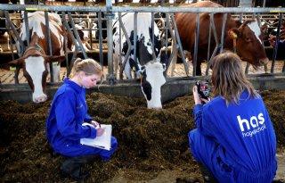 Judith+Roelofs%3A+%27Met+drone+verhitte+koeien+afkoelen%27