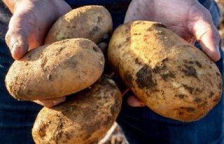 Positief oordeel over nieuwe gmo-aardappel in VS