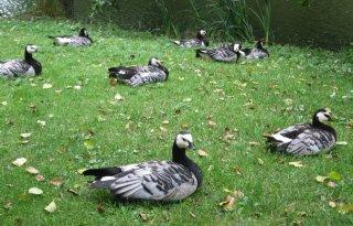 Vogelgriep+treft+nog+altijd+wilde+vogels+in+noorden