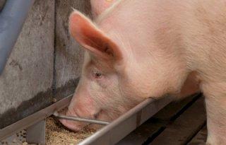 Raad+van+State+blokkeert+uitbreiding+varkenshouderij+Creil