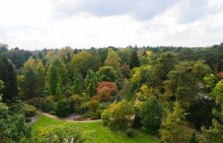 Belgisch arboretum is sleutel tot veredelingsproject