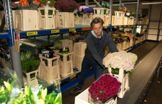 Rob Beeren focust op gele courgettes in vollegrond
