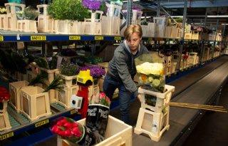 Eurostat telt in Nederland minder geiten dan CBS