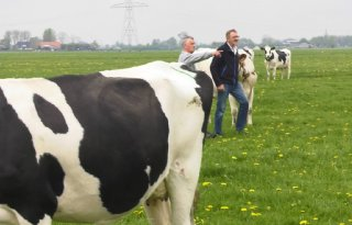 Global Dairy Trade zorgt voor wat optimisme
