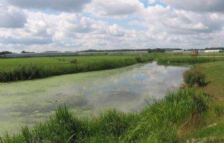 ZLTO: 'Handelingsperspectief boer nodig in waterbeheer Rivierenland'