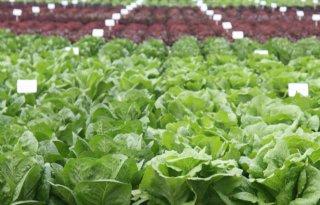 Tuinbouwsector+Zuid%2DNederland+slaat+handen+ineen