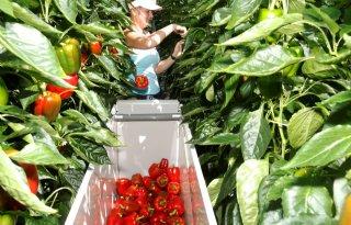 Glastuinbouw stelt adviesraad in voor internationale werknemers
