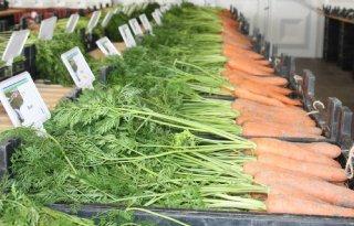 Tegenvallende aanwas stimuleert aardappelmarkt