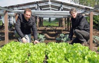 Gewassen groeien onder zonnepanelen