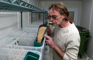 Dutch Cricketfarm: 'Krekels sleutel voor eiwittransitie'
