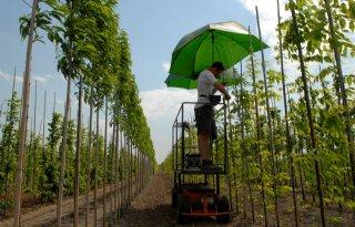 Prijs planten en bomen stijgt in Duitse tuincentra