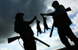 Jacht op haas en konijn dit seizoen toegestaan