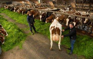 Winnaar HHH ziet graag oude koeien