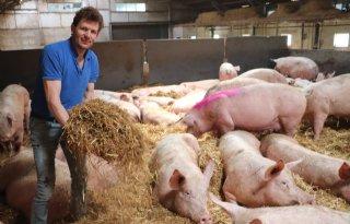 Proef met dagontmesting in volle gang bij varkenshouder in Zijtaart