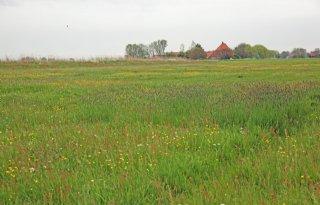 Weidevogelkuikens lopen vast in kruidenrijk gras