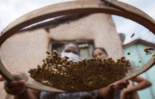 Oxfam Novib: supermarkten belonen arbeiders in keten niet