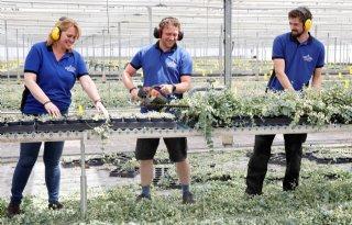 Vetplanten passen in vergroeningstrend