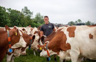 Iedere koe van Pieter Bogaards krijgt calciumbolus na afkalven