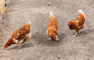 Lijst met natuurlijke middelen veehouderij online