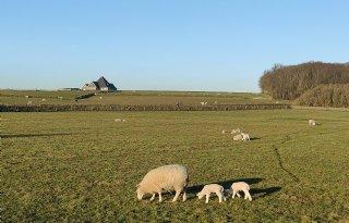 LTO Noord wil agrarisch kenniscentrum op Texel