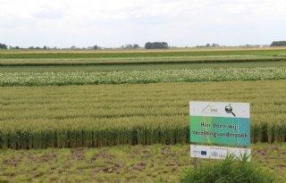 Noord-Nederlandse boeren gaan verzilting te lijf met Zoet op Zout