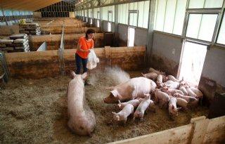 Zesde editie Het Beste Idee van Varkensland gaat van start