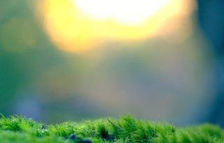 Stikstofdepositie melkveebedrijf meten met gras en mos