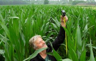 Groei mais gaat lokaal hard, eerste pluimen in zicht