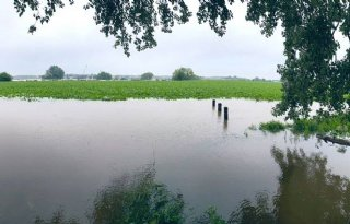 Gewassen Noord-Limburgse boeren onder water