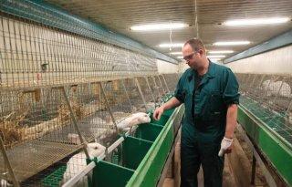 Stef Noordman: 'De konijnen hebben het hier heel goed'