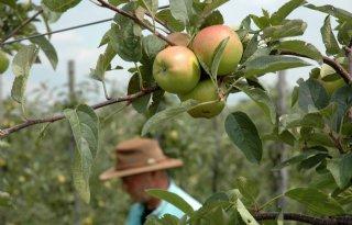 Meer appels en minder peren verwacht dan vorig jaar
