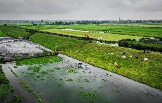 VVD-Tweede Kamerleden vragen naar rivierkreeft bij dijk