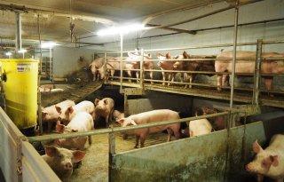 Jaco Geurts bouwt zeugenstal voor extra meters dierenwelzijn
