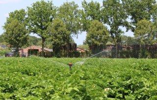 Veertig sprinklers op 1 hectare aardappelen